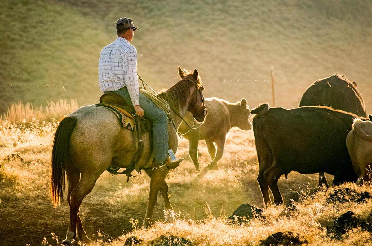 village missions cowboy pastor doug helping herd cattle